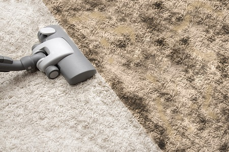 The Dangers of Mold in Your Carpets